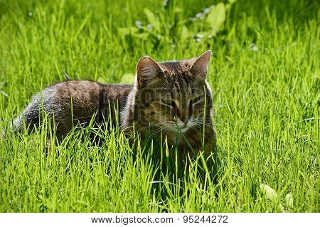 Greyish-brown cat in the grass on a sunny meadow.