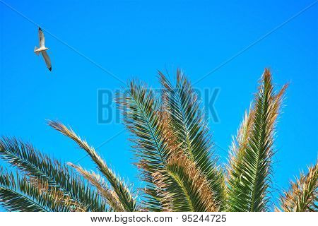 Seagull Flying Over Palm Branches