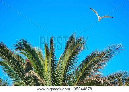 Seagull Flying Over A Palm Tree