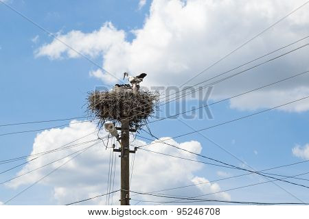Stork Nest On A High Post