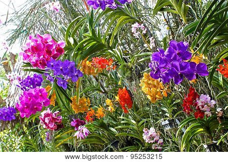 Blooming Gorgeous Garden Of Orchids In A Greenhouse