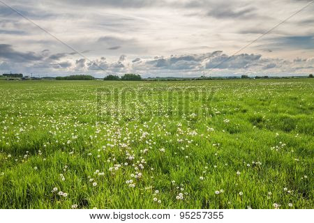 Dandelion Landscape in a Storm