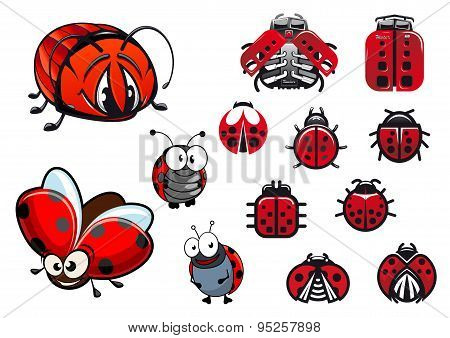 Ladybugs, ladybirds and beetles cartoon insects