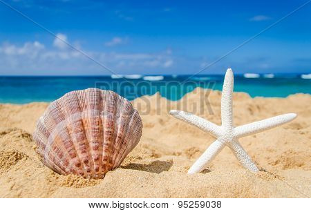 Starfish With Seashell On The Sandy Beach