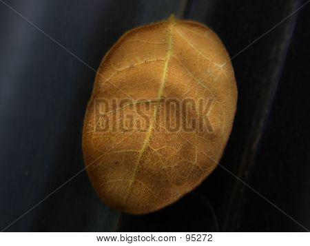 Small Dry Leaf