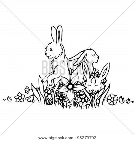 Black and white rabbit isolated.