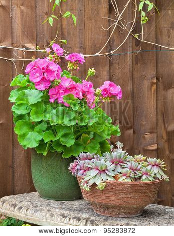 Potted Geranium Flower And Succulents On A Stone Bench
