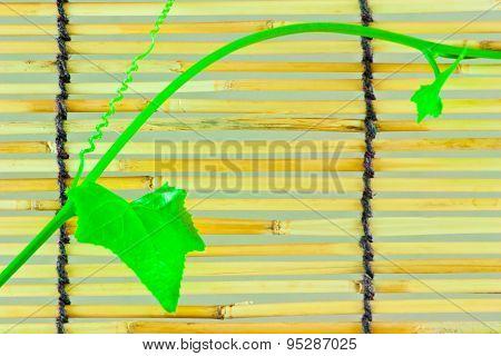 Ivy Shoots On  Japanese Bamboo Blind