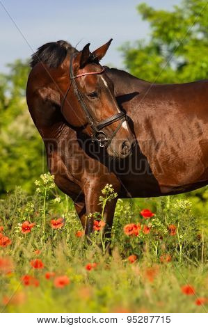 Horse portrait in flowers