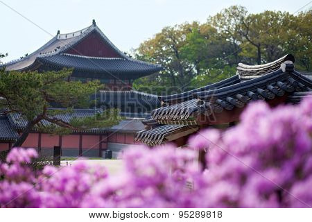 Rhododendron Blooming In Changdeokgung Palace In Seoul, Korea