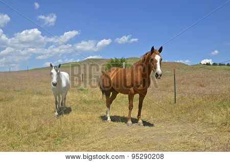 Horses in ranch pasture
