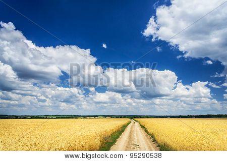 Amazing Golden Wheat Field.