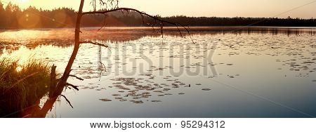 Panoramic view of early morning coniferous wood lake