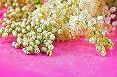 picture of meadowsweet  - Flowering plants spirea on a pink background - JPG