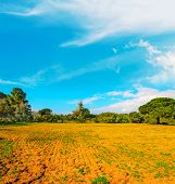 pic of bent over  - blue sky over brown soil and trees - JPG