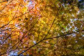 picture of canopy  - Tree branches and leaves creating a canopy - JPG