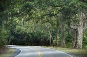 stock photo of canopy  - A photograph of a curving highway on Edisto Island under a canopy of leaves and spanish moss - JPG