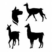 stock photo of lamas  - Lama icons and silhouettes - JPG