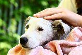 foto of wash-basin  - kids wash stray white puppy in yellow basin on the summer garden background - JPG