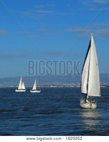 Three Sailboats San Francisco Bay, California