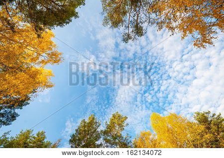 blue sky background framed by colorfull forest foliage