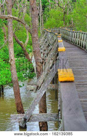 Wooden plank walking bridge in rain forest