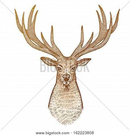 Deer isolated on white background. Head of reindeer with big horns full face. Festive decoration card. Animal symbol of Christmas holiday. Print gold foil. Vector art illustration. Vintage engraving.