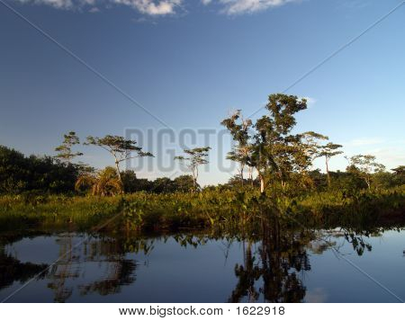 mangrove swamp at bocas del toro