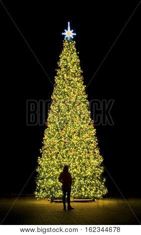 New year fir-tree and silhouette of person. Night and street outdoor scene.
