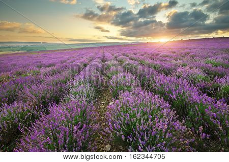 Lavender beautiful meadow. Spring nature composition.