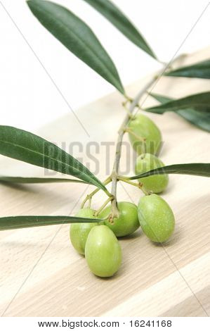 Olive tree branches with fruits on white background