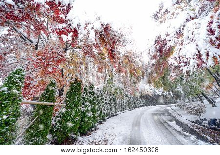 Blurred Winter Background With Early Snow And Colourful Autumn Leaves.