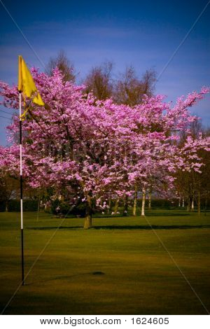 Teared golf flag infront of a Cherry
