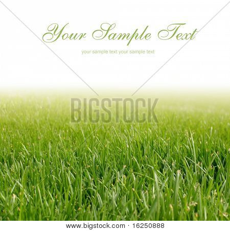 background with spring green grass