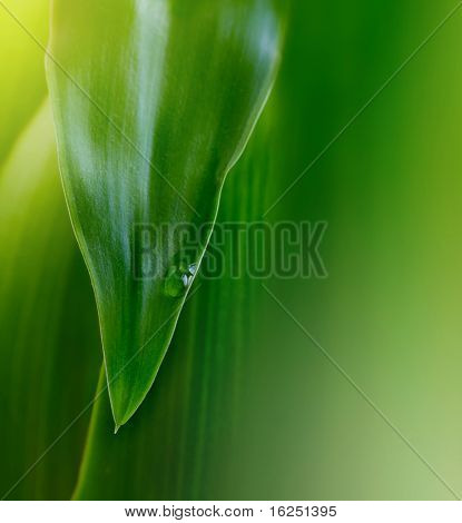 green leaf background with water drop