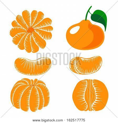 Collection of peeled tangerine slices fruit isolation on a white background. Design vector template.
