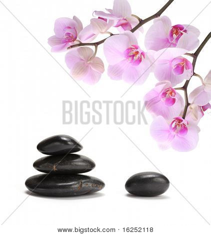 black stones and pink orchid flower