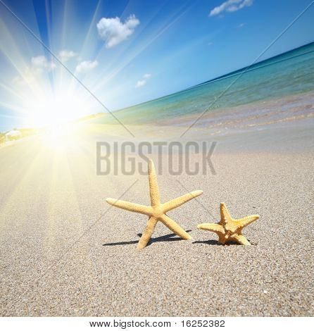 two starfish on a beach