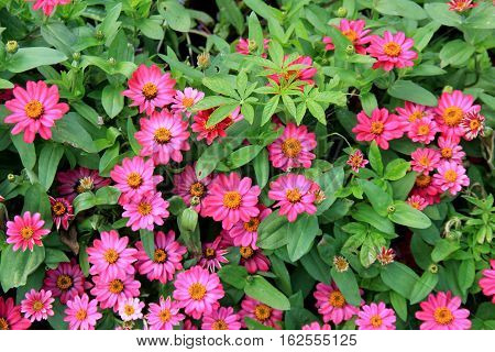 Landscaped garden with background of beautiful pink and yellow flowers