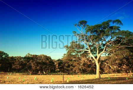 Interior de Australia