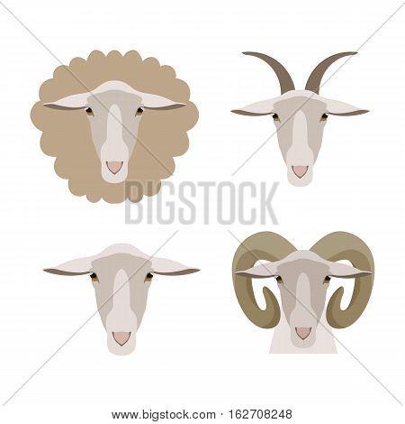 Sheep, goat, ram face cartoon flat vector set.goat head. Livestock animals. poster, banner, print advertisement web design element. Livestock, cattle animals