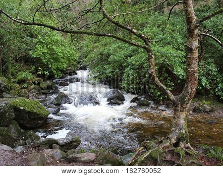 Creek in an Irish village, County Kerry, Ireland