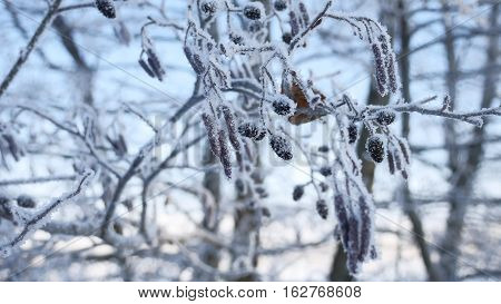 frozen branches linden tree in snow on a blue sky winter nature landscape