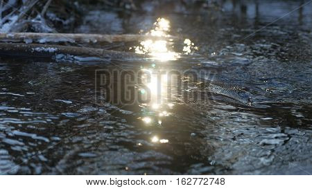 Forest river flowing beautiful frozen ice on dry branch swinging, sunlight, nature sun glare landscape
