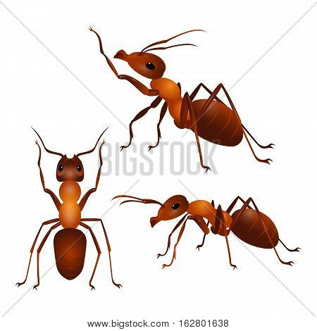 Brown ants isolated on white. Insect icon. Termite. Eusocial insect. Brown animal insect creature with elbowed antennae and t distinctive node-like structure that forms their slender waists. Vector
