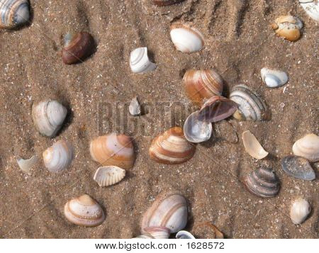 Beach And Shells