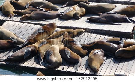 Seals tanning on a peer in San Francisco