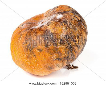 pumpkin with mold isolated on white background.