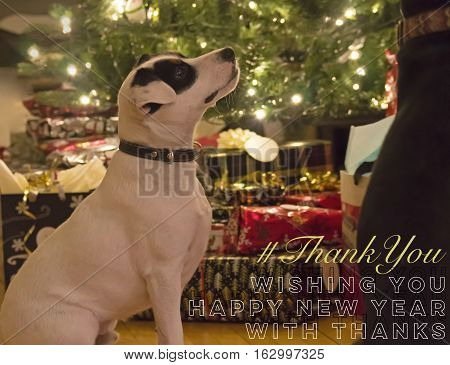 Cute Dog Animal Wishing You Happy New Year with thanks thank you card with hashtag for seasons greetings to social media network friends, followers, community or clients end of the year #thankyou Animal theme with room for copy space