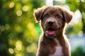 Portrait Of Brown Puppy With Bokeh Background poster